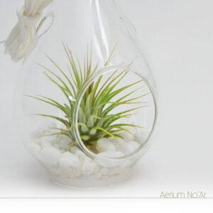 Aerium Gota Branco Pequeno