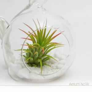 Aerium Redondo Branco - Pequeno