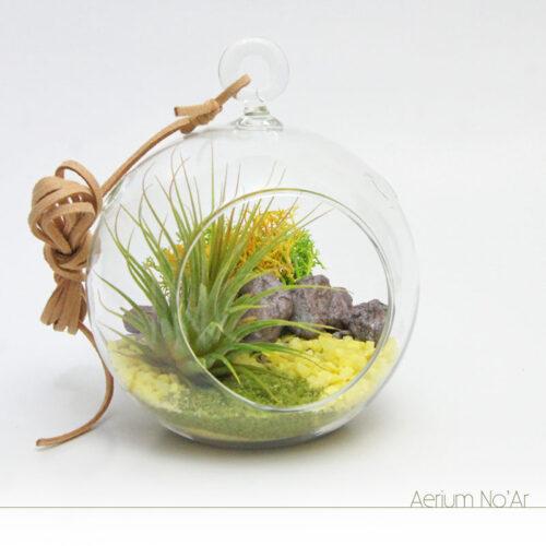 Aerium Redondo Amarelo e Verde - Pequeno