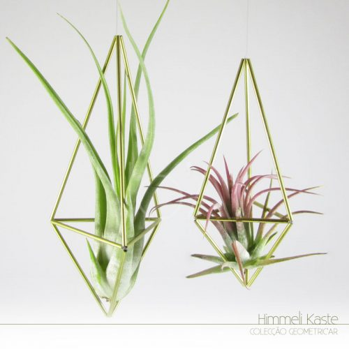 Himmeli Kaste - Plantas No'Ar