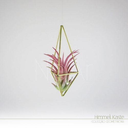 Himmeli Kaste - PlantasNoAr - Ionantha Red