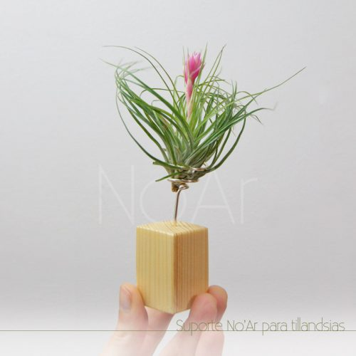 Suporte para tillandsia - Plantas No'Ar